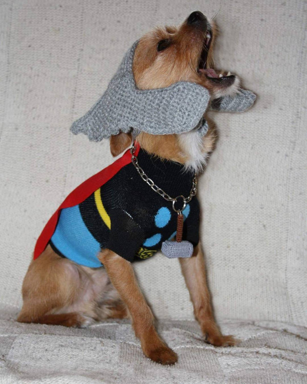 A few other costumes she created for her dog & Crocheted and Knitted Ghostbusters Dog Costume [Pics]