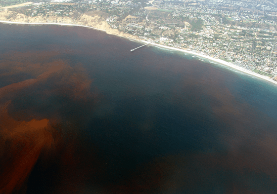 Red Tide washing up on beach in San Diego