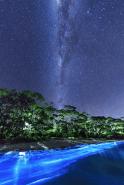 Bioluminescence at night