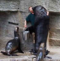 Seal kisses zoo handler