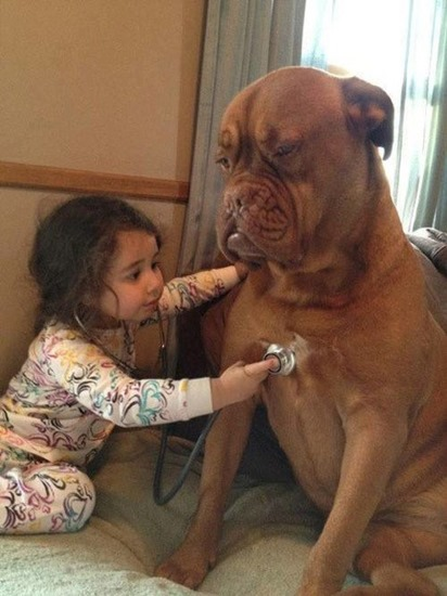 Toddler listens to patient dog's heart