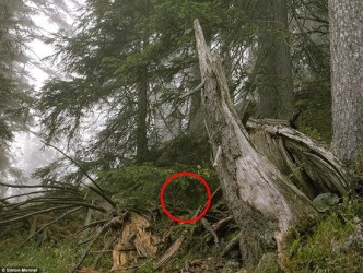Hidden sniper indicated by red circle