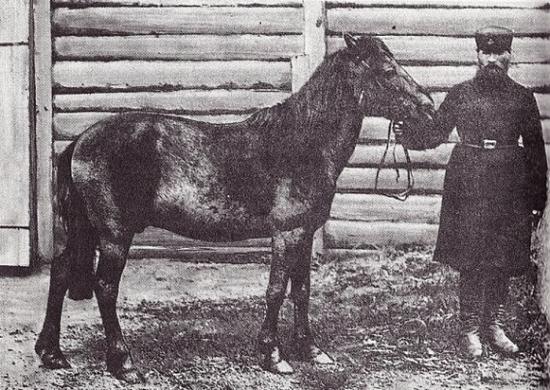 Rare photograph of a Tarpan wild horse