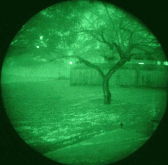 Cats and dogs have excellent night vision