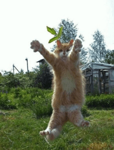 Cute well-timed photo - cat flying midair