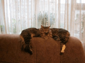 Cute well-timed photo - two cats sleeping