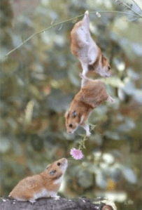 Cute well-timed photo - squirrel clutching flowers in hand hangs near another squirrel