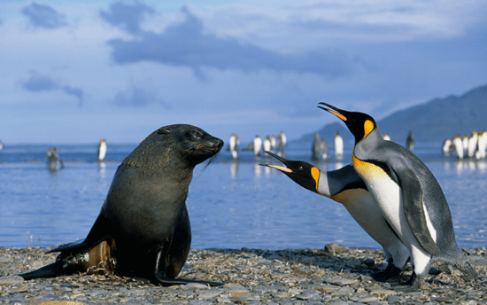 A seal with two penguins