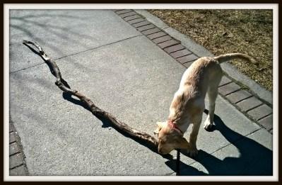 POD: Ruby's new Stick