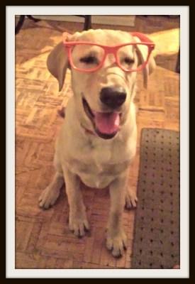 POD: Ruby's new glasses