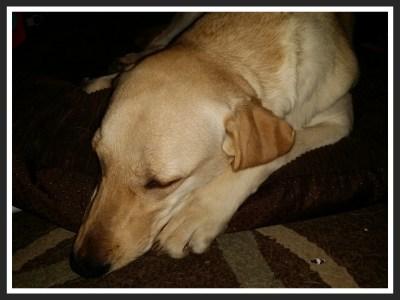 POD: Sleeping Ruby