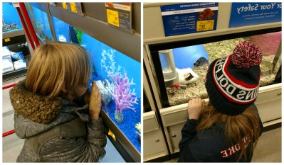 POD: At the Pets store