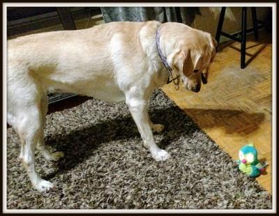 POD: Ruby Meets a Hatchimal