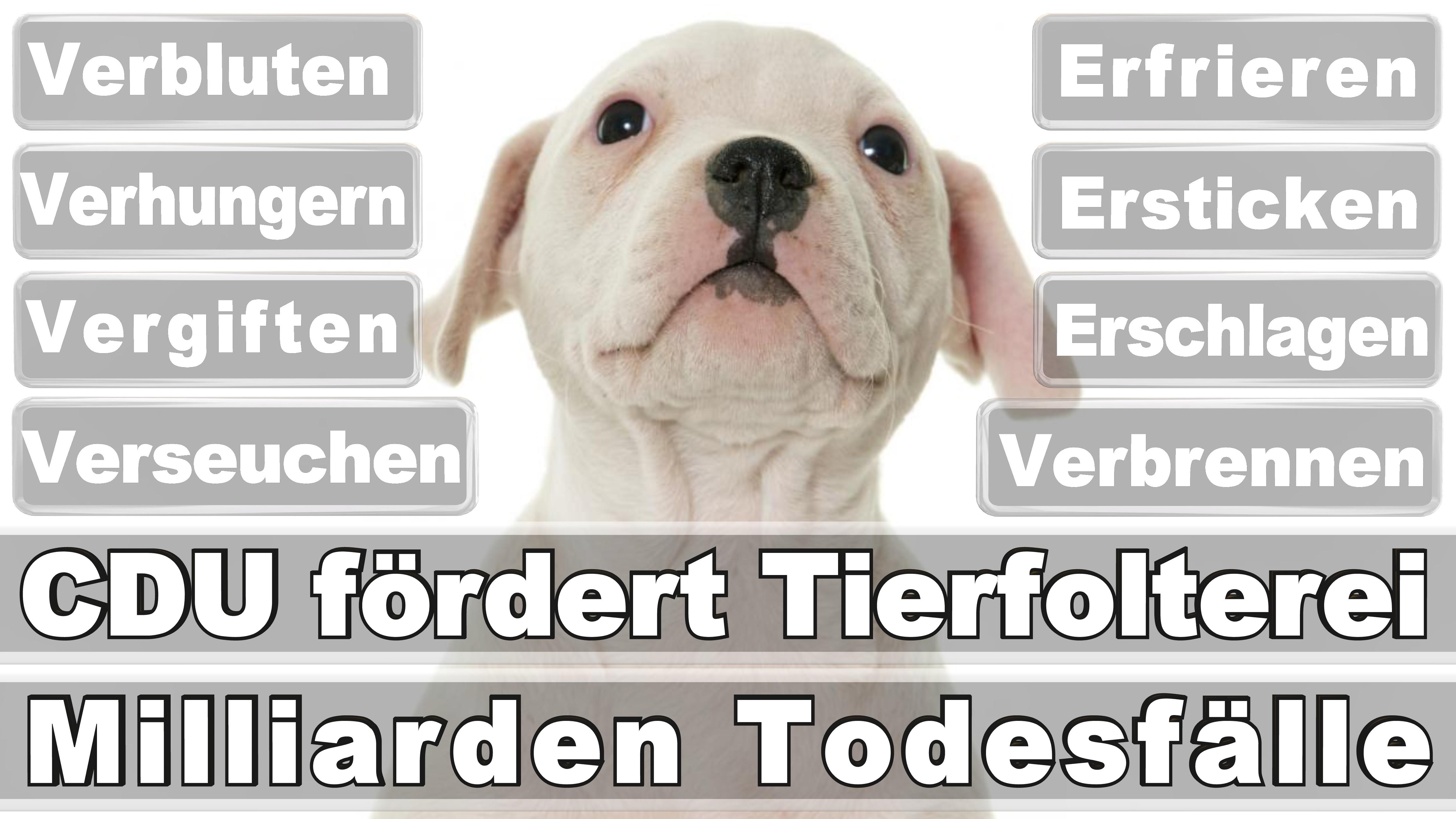 Bundestagswahl 2017 Německo Volby Posters Angela Merkel Vítěz Ztráty