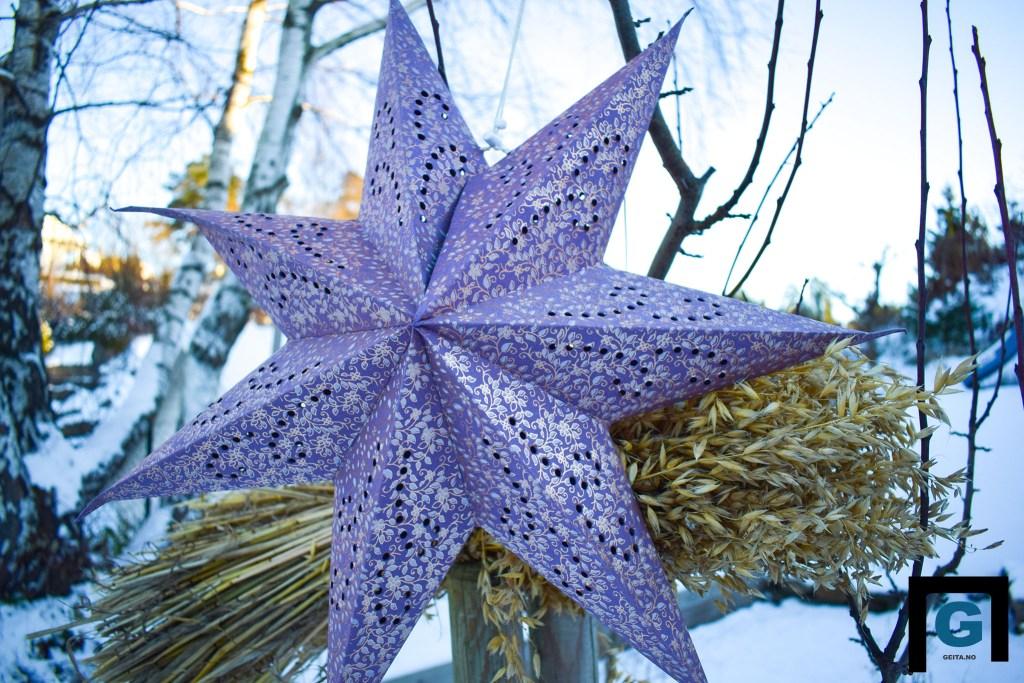 FOTOKONKURRANSE: Lokalavisen Geita kårer det flottest dekorerte julehuset på Tromøy. Illustrasjonsfoto