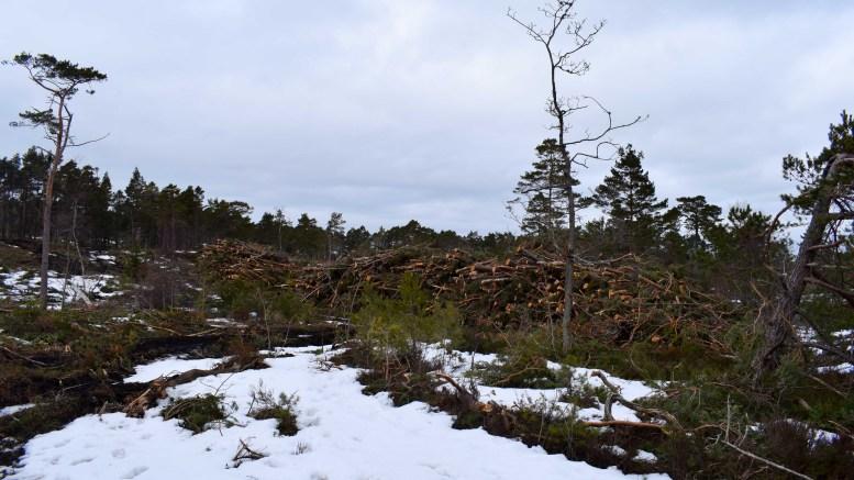 NÆRINGSUTVIKLING: Alveberget hyttefelt er i startgropen for å bli bygget ut. Foto: Esben Holm Eskelund