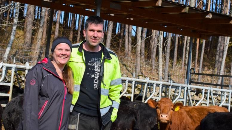 FRITTGÅENDE KUER: Bondeparet Kristin Vågnes og Rune Wærstad driver på tredje året med kuer på Vågsnes gård. Foto: Esben Holm Eskelund