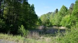 SJELDEN ART: Forskere på jakt etter en helt spesiell rødlistet art i Hofstøl- og Flangeborgkilen i august i fjor gjorde ingen funn. Det er bare her og et par steder i Telemark arten noensinne er påvist. Foto: Esben Holm Eskelund