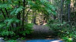 SKOLEVEI: Flere politikere reagerer på at kommunen foreslår skogen som skolevei for en sju år gammel jente, som bor et par hundre meter for nær skolen til å få innvilget skoleskyss. Foto: Esben Holm Eskelund