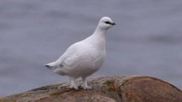 SJELDEN GJEST: Da denne fuglen ble observert på Tromøy ble det slått fuglealarm i helgen. Foto: Terje Moen