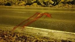 RÅDYRPÅKJØRSEL: Et rådyr måtte bøte med livet etter å ha blitt påkjørt ved Kongshavn natt til tirsdag. Foto: Privat