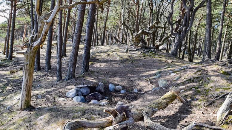 GRILLER I GRAVA: Fylkeskommunens arkeolog mener gravhauger på Hoveodden må skiltes for å unngå at de raseres av grillende turgåere. Midt i bildet ser du bålrester med grillpanna slengt over. Foto: Esben Holm Eskelund