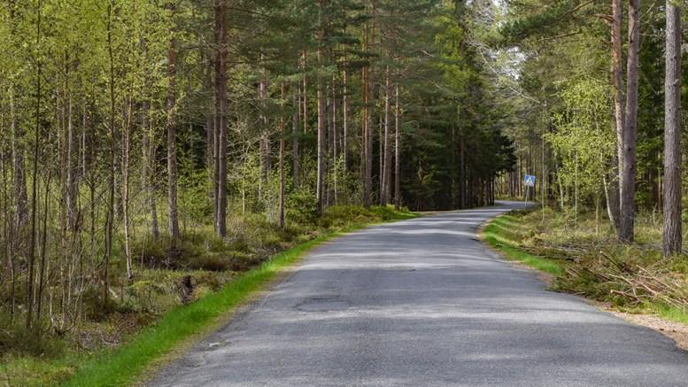 VEIUTBEDRING: Utvidelse av veien mellom Hoveodden og Hove Leirsenter står på ønskelista til nasjonlalparkforvaltningen for Raet. Foto: Esben Holm Eskelund