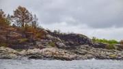 SKJØTSELSTILTAK: Fylkesmannen i Agder gir noe støtte til skjøteselstiltak på Merdø også i år. I vår ble det brent en del kystlynghei i uthavna utenfor Tromøy. Foto: Esben Holm Eskelund