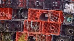 HUMMERFISKE: Årets jakt på havets kardinal er i gang. Illustrasjonsfoto/Esben Holm Eskelund