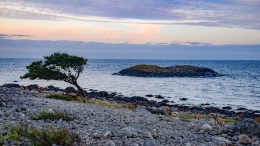 DET FORBLÅSTE TREET: Dette møter deg på sørsiden av Merdø. Foto: Esben Holm Eskelund