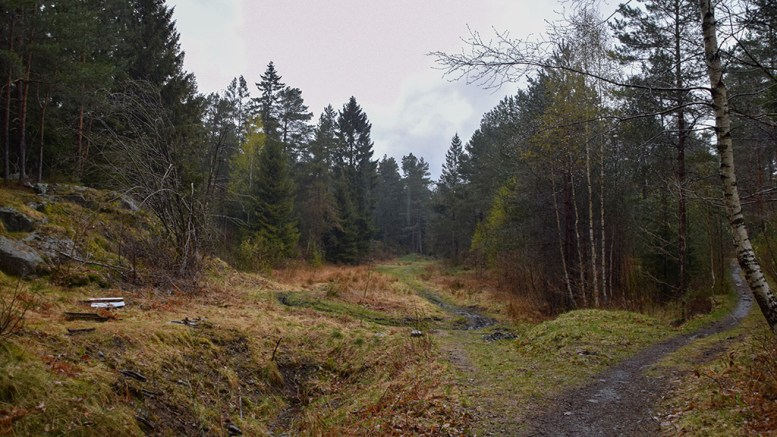 SVERRESMYR: Myrlandskap inne i skogen vest på Tromøy. Foto: Esben Holm Eskelund