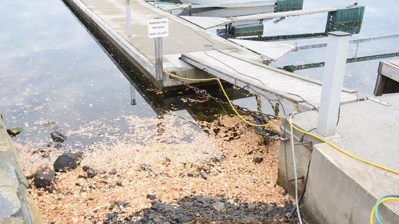 TREFLISUTSLIPP: Store mengder flis fra havna på Eydehavn har havnet i Tromøysund, noe som får lokalbefolkningen på Tromøy til å reagere. Foto: Esben Holm Eskelund