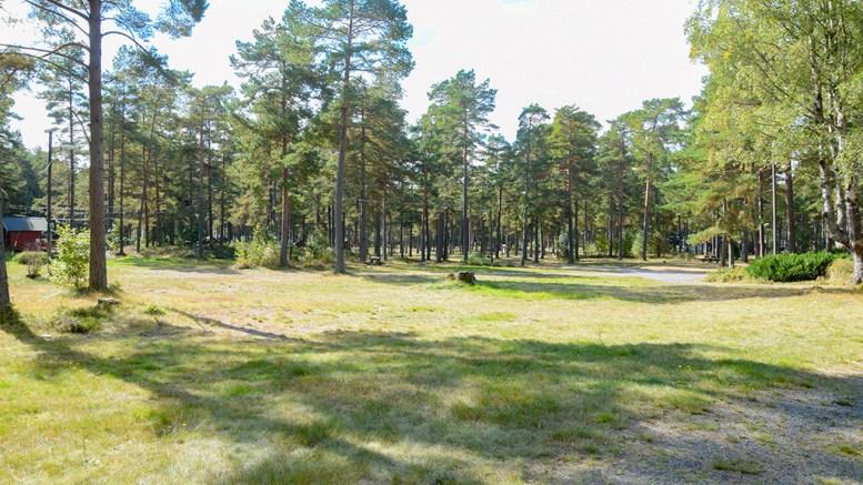 NASJONALPARK: Nasjonalparkforvalter Jenny Marie Gulbrandsen vurderer at deler av dagens campingområde på Hoveodden under gitte forutsetninger kan innlemmes i Raet nasjonalpark. Foto: Esben Holm Eskelund