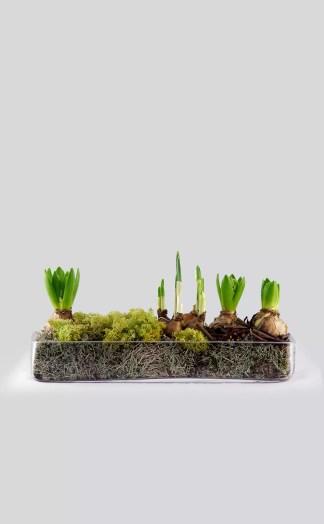 Augalų kompozicija - pavasaris stikle