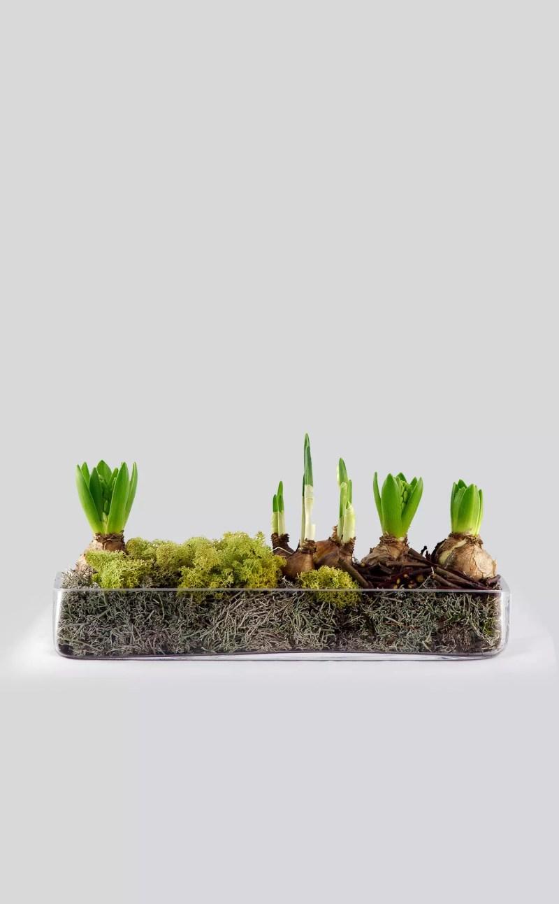 Augalų kompozicija Pavasaris stiklo inde
