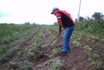 Cuba entrega 1,3 milhão de hectares de terra ociosa para usufruto da população
