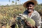 Bancada ruralista quer que trabalhador troque salário por comida