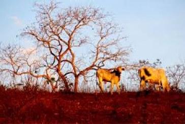 Biomas inteiros são devastados no Brasil, segundo os pesquisadores