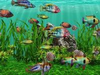 3D fish aquarium screensaver DVD