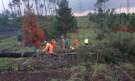 Akibat Hujan Disertai Angin Kencang, Sekian Pohon Tumbang Timpa Kabel Listrik di Garut