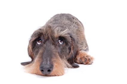 dog- scared