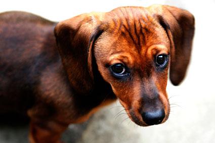 scared-dog-425mk091511