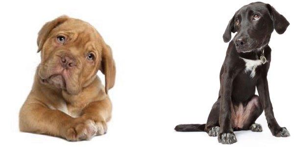 Gencon dog head collar wearing dogs