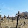Actualité genealogie Avril 2018 - En Mayenne, un cimetière de « fous » oublié par l'Histoire