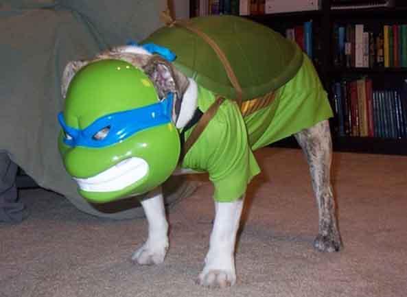 20-Perro-Tortuga-Ninja-20