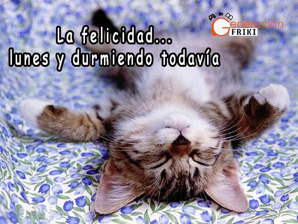 660) 13-10-14 Gato-durmiendo-feliz-lunes-Humor
