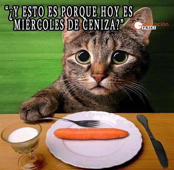 855) 18-02-15 gato-ojazos-miercoles-ceniza-Humor