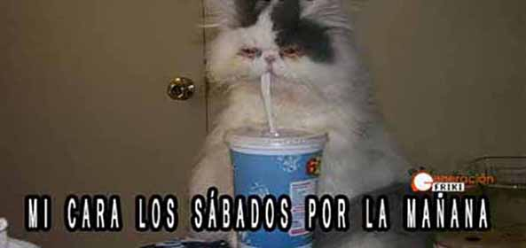 965) 15-05-15 gato-resaca-Humor