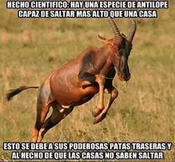 983) 05-06-15 antilope-salta-casas-Humor