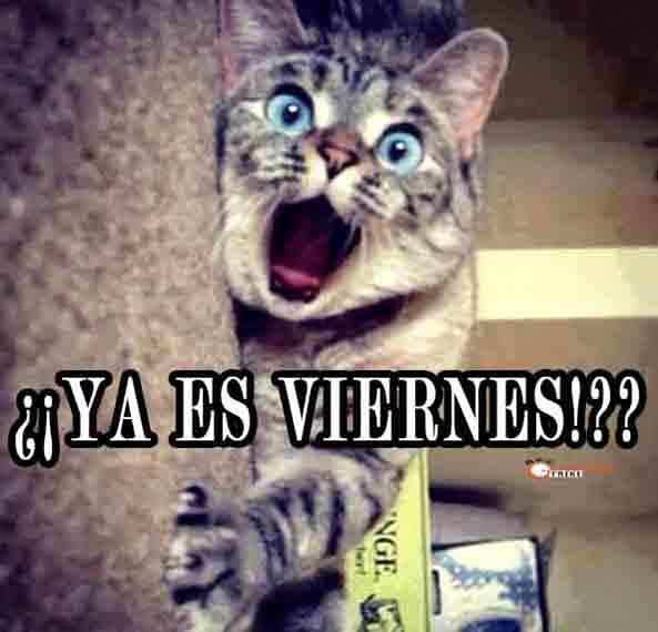 990) 12-06-15 gato-sorpresa-Viernes-Humor